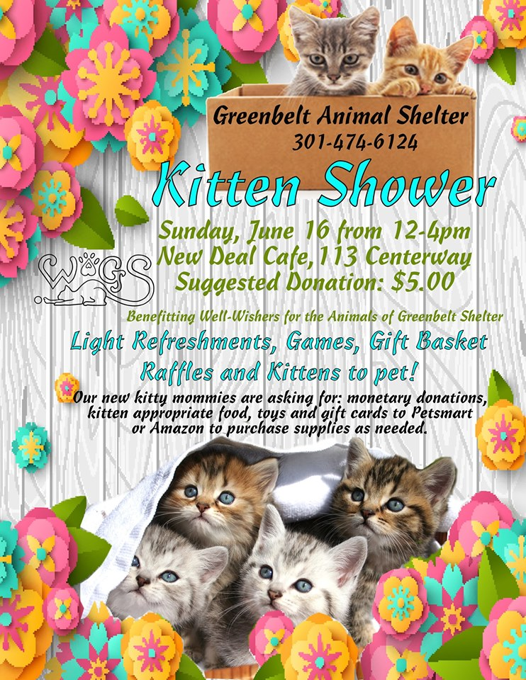 WAGS and Greenbelt Animal Shelter's Kitten Shower (June 16, 2019, Noon-4 PM)